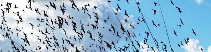 Ahuyentar Pájaros Córdoba
