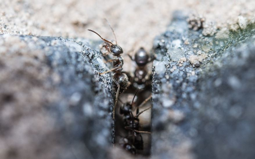Eliminar Hormigas en Córdoba - Abecor