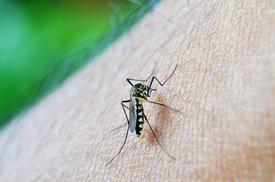 Plaga de Mosquitos Córdoba - Abecor