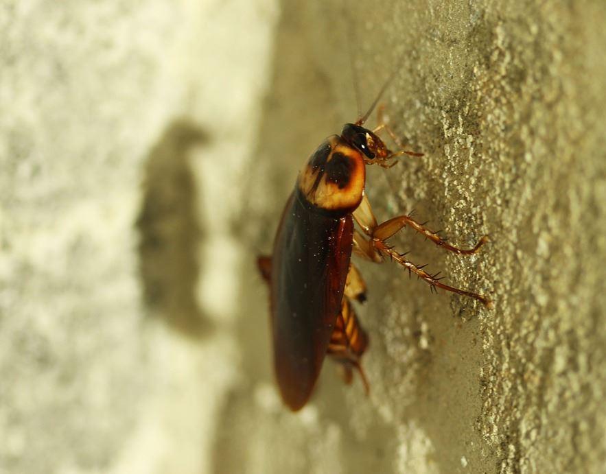 Eliminar Cucarachas en Casa Córdoba - Abecor
