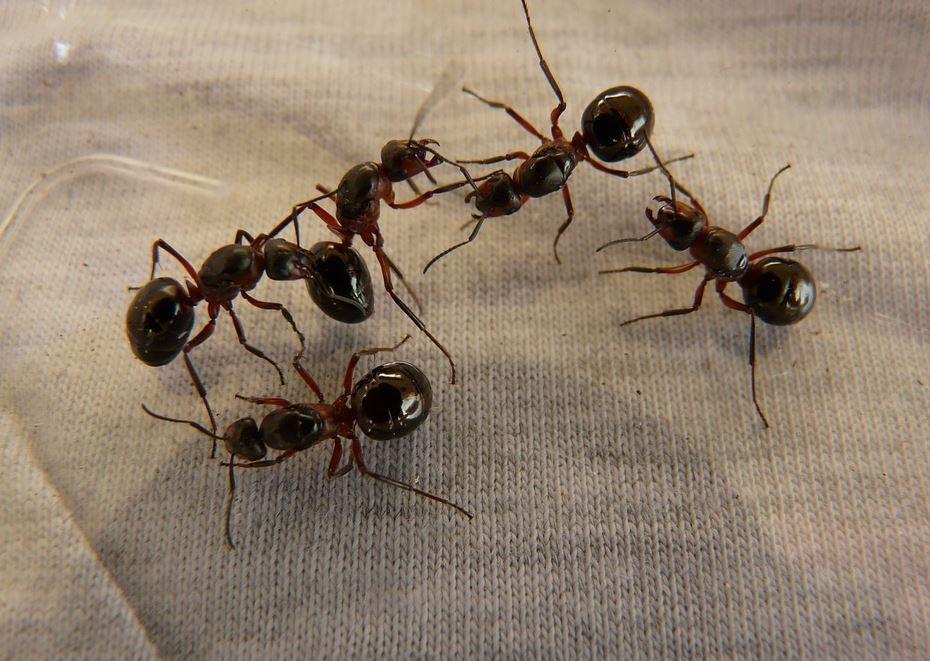 Plaga de Insectos Córdoba