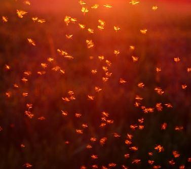 Insectocutores Córdoba - Abecor