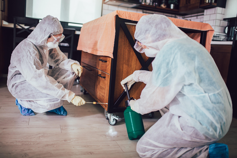 ¿Qué plagas son más comunes en invierno?
