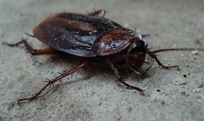 Cómo acabar con las cucarachas en verano